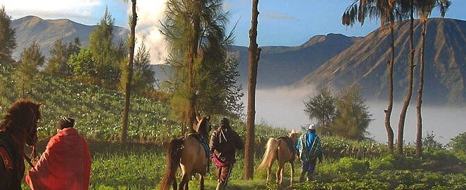 Ijen Kalibaru Coffee Plantation Bromo